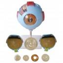 Oko, model 6 - częściowy